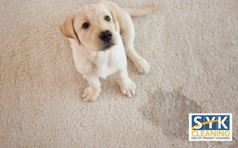 pet stain on carpet blog post